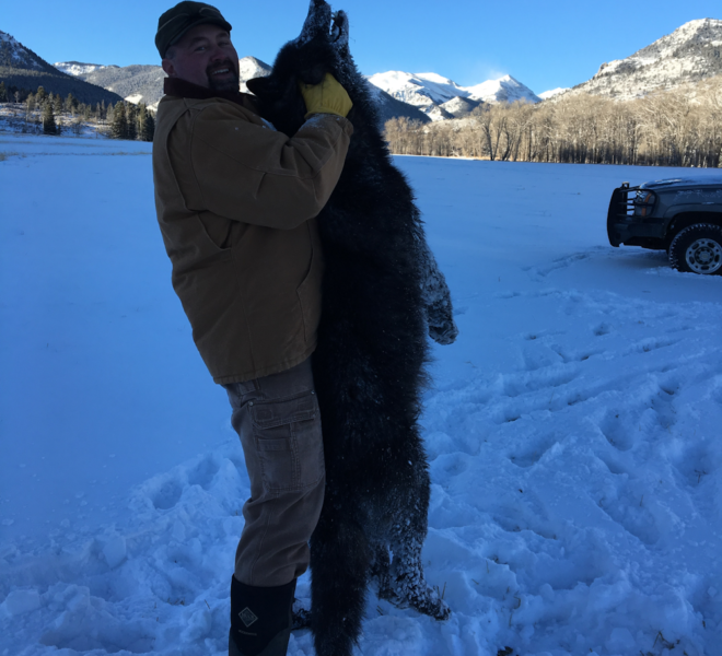 Wyoming Wolf Hunting Guides