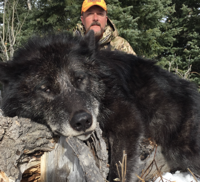 Wyoming Hunting Outfitters For Wolf