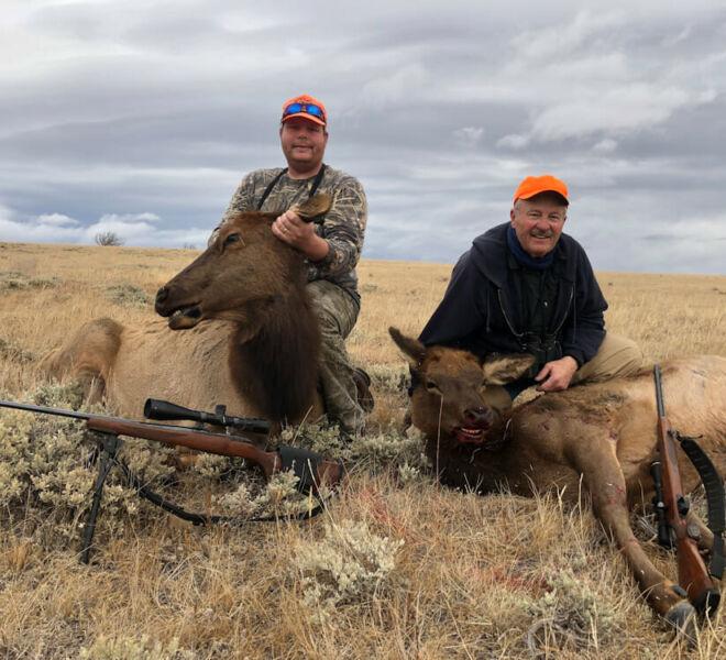 Cow Elk Hunting In Wyoming