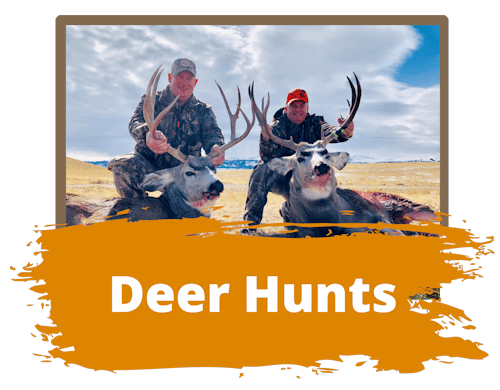 Big Game Deer Hunts Wyoming