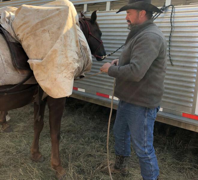Pack Horses For Elk Hunting