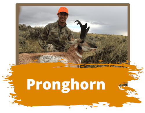 Pronghorn Hunts Wyoming