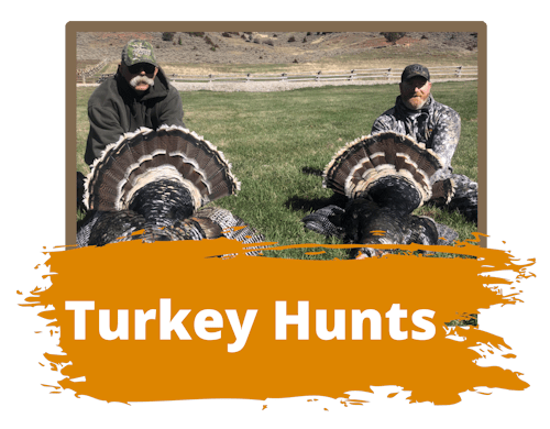 Turkey Hunts Wyoming