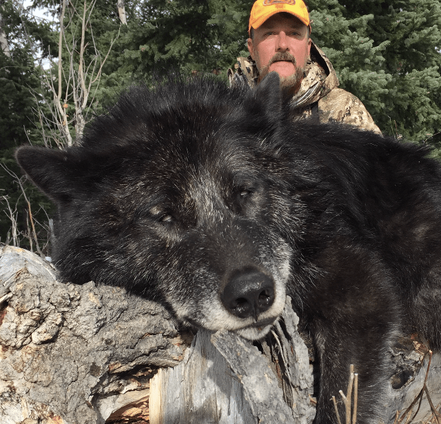 Wyoming Wolf Outfitters | Wyoming Hunting Outfitters
